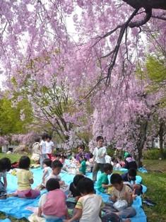 つばめ・ひばりさん(3歳児)と、もみのきさん(5歳児)と・・・今日は、お母さんたちも、たくさん、お花見に参加!!