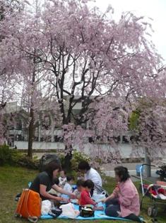 桜の木のしたで、はじめての「お花見」