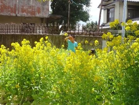 菜の花と園児