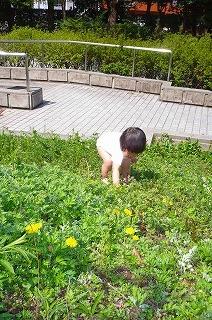 ダンゴムシ探しをする園児
