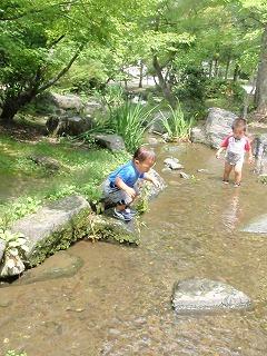 浅い川で遊ぶ園児
