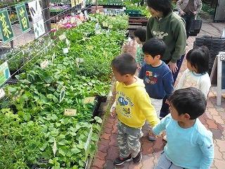 夏野菜の苗を選んでる園児