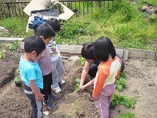 苗植えに、はじめて挑戦