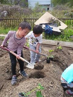 穴を掘る園児
