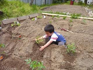 土をかぶせる園児