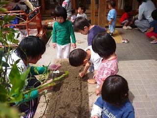 花壇に種を植える園児