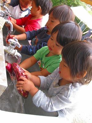サツマイモを洗う園児達